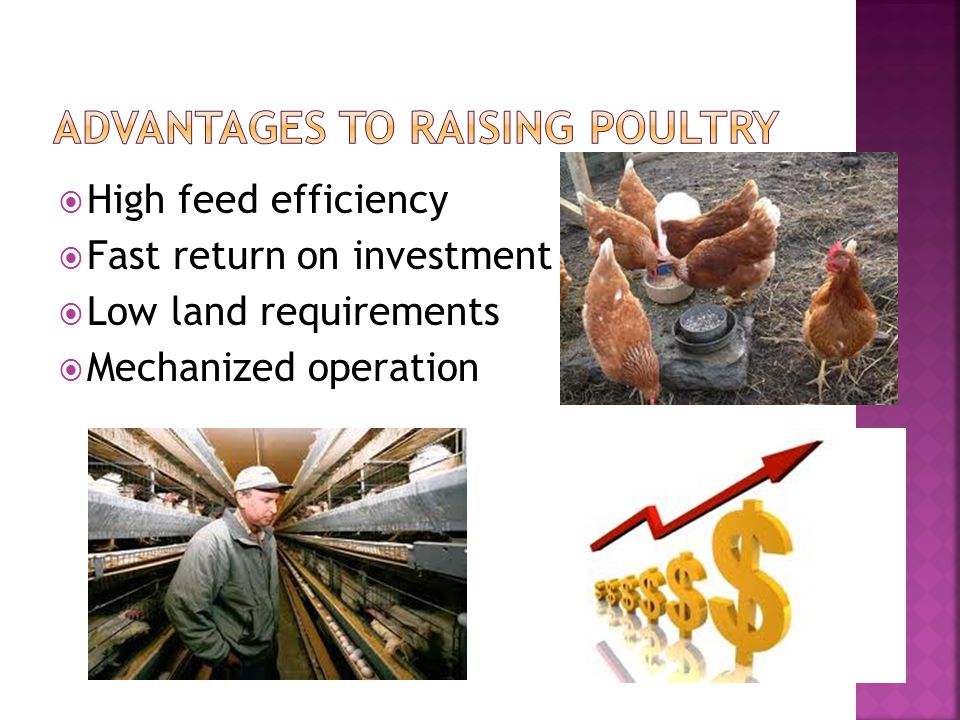 High feed efficiency Fast return on investment Low land requirements Mechanized operation