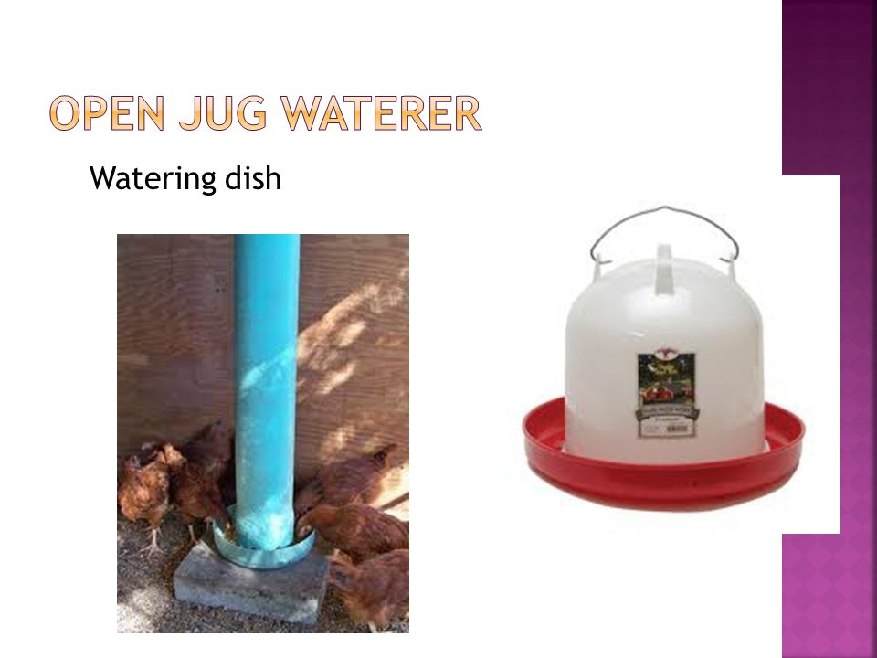 Watering dish