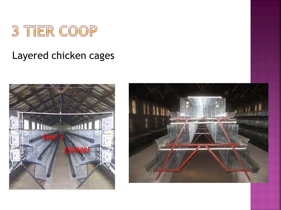 Layered chicken cages