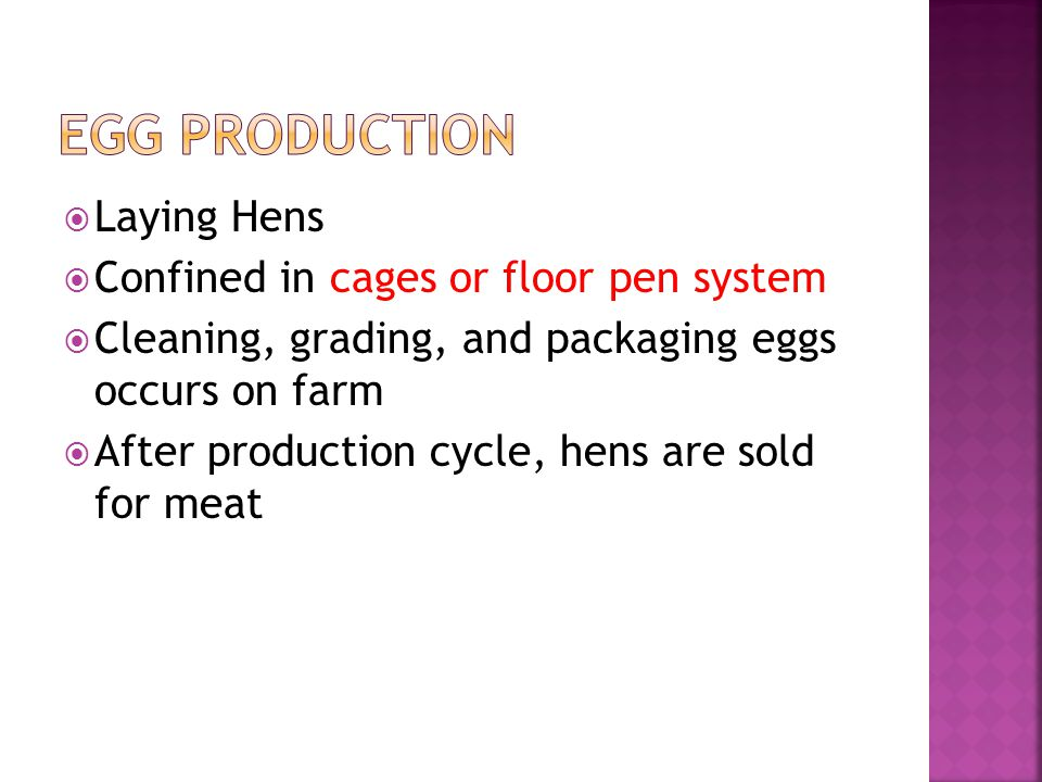 Laying Hens Confined in cages or floor pen system Cleaning, grading, and packaging eggs occurs on farm After production cycle, hens are sold for meat