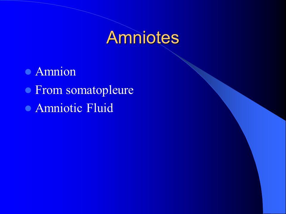 Amniotes Amnion From somatopleure Amniotic Fluid
