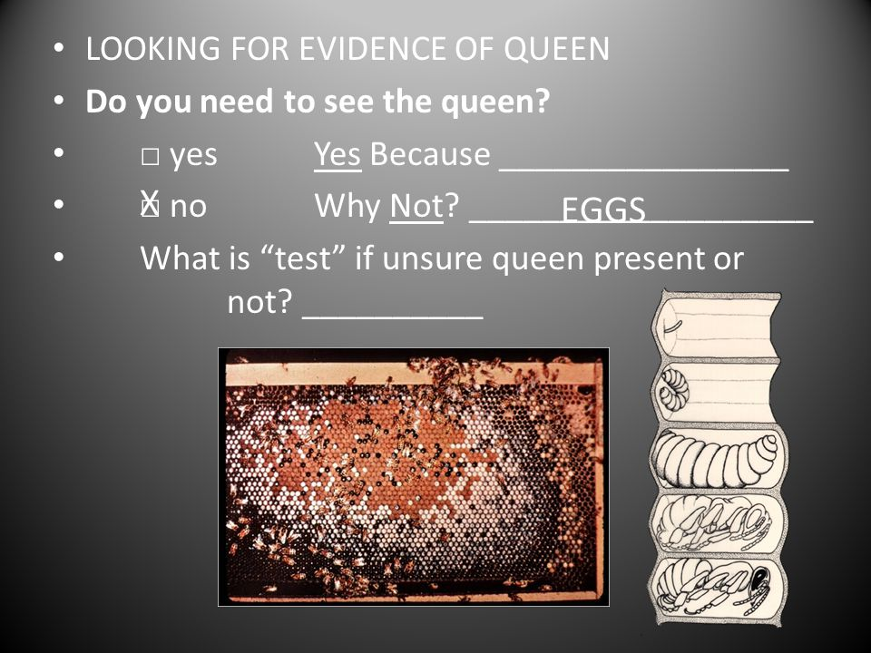 LOOKING FOR EVIDENCE OF QUEEN Do you need to see the queen.