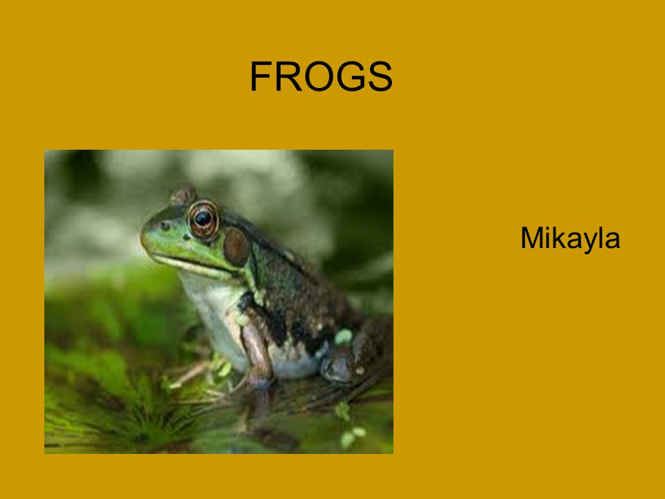 Frog Stage 2: Tadpoles Interesting Facts: They eat algae and other tiny water plants as they swim.