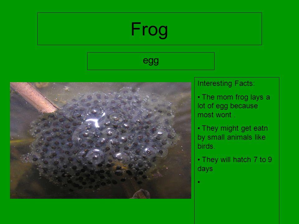Frog Life cycle Jace