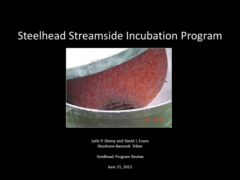 Steelhead Streamside Incubation Program Lytle P. Denny and David J. Evans Shoshone-Bannock Tribes Steelhead Program Review June 21, 2012