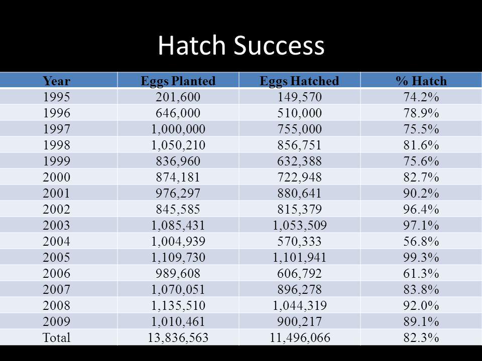 Hatch Success YearEggs PlantedEggs Hatched% Hatch 1995201,600149,57074.2% 1996646,000510,00078.9% 19971,000,000755,00075.5% 19981,050,210856,75181.6%