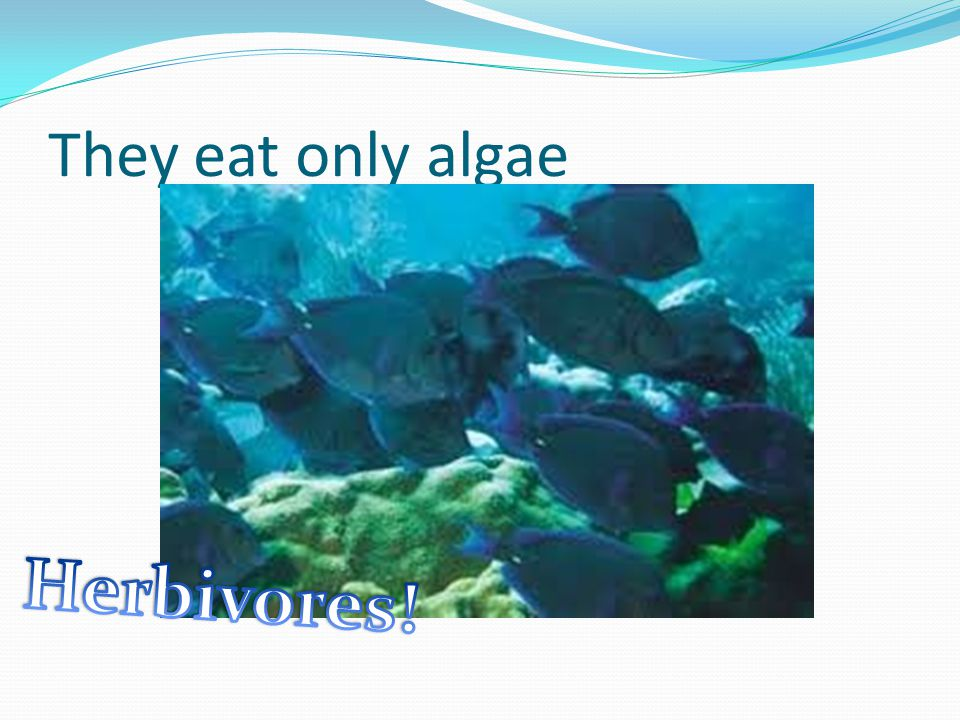 They eat only algae