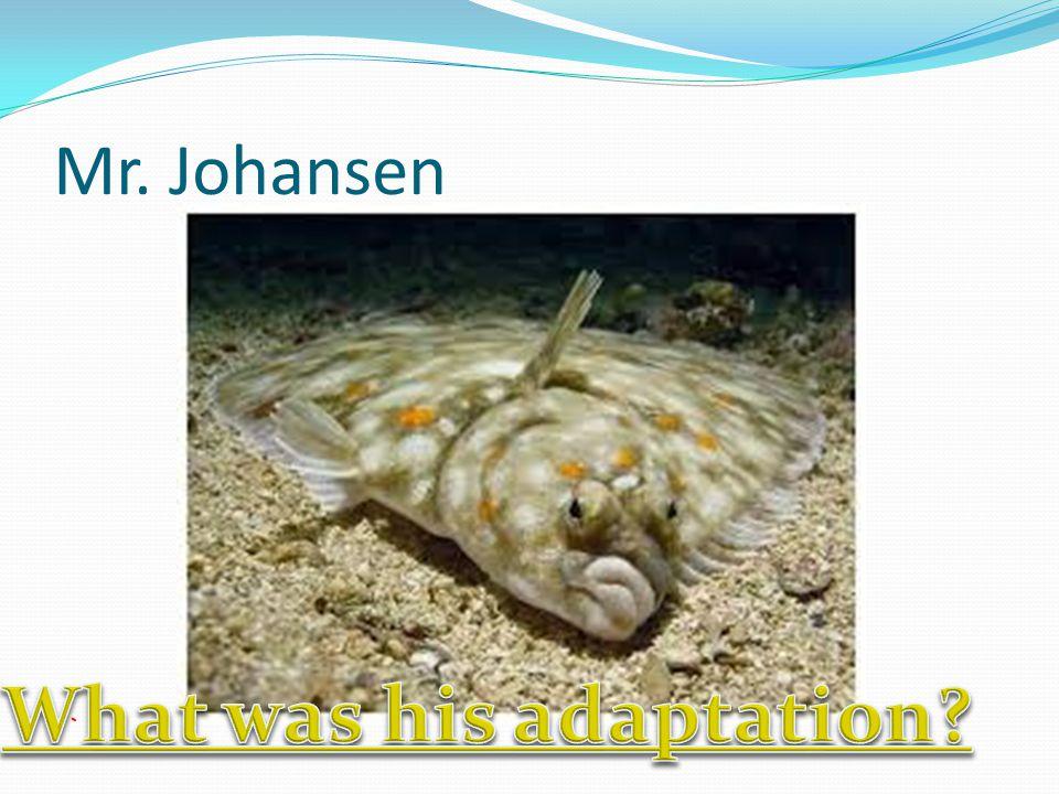 Mr. Johansen