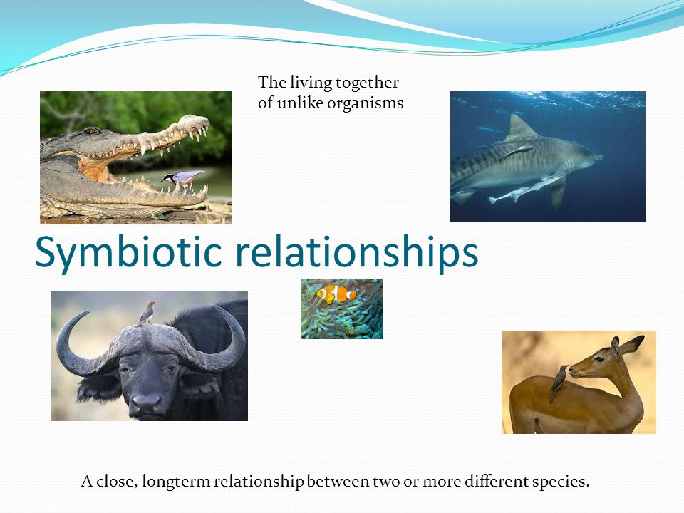 Symbiotic relationships A close, longterm relationship between two or more different species. The living together of unlike organisms