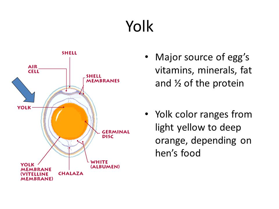 Yolk Major source of eggs vitamins, minerals, fat and ½ of the protein Yolk color ranges from light yellow to deep orange, depending on hens food