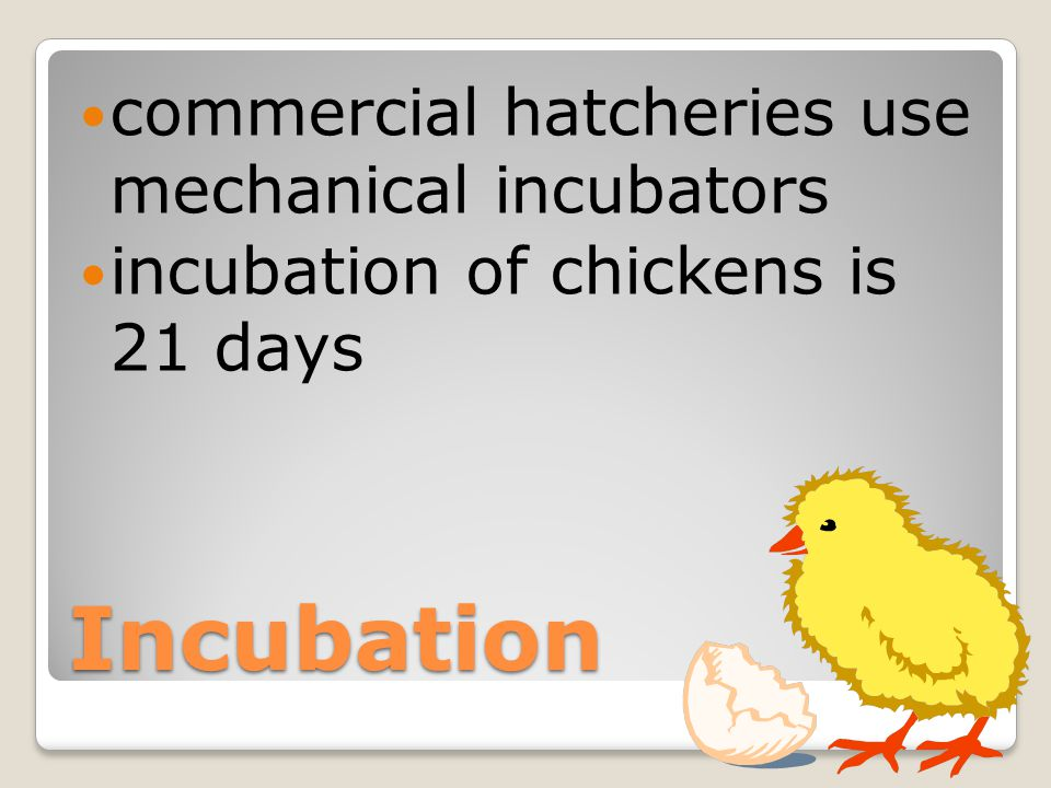 Incubation keeping eggs at the right temperature and humidity for hatching hen does this by sitting on the eggs