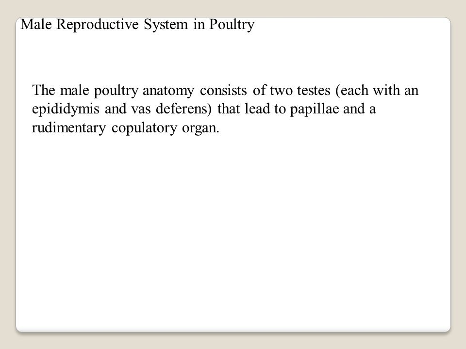Structure and Function of the Reproductive System in Poultry The reproductive anatomy of poultry differ when compared to that of other animal species.