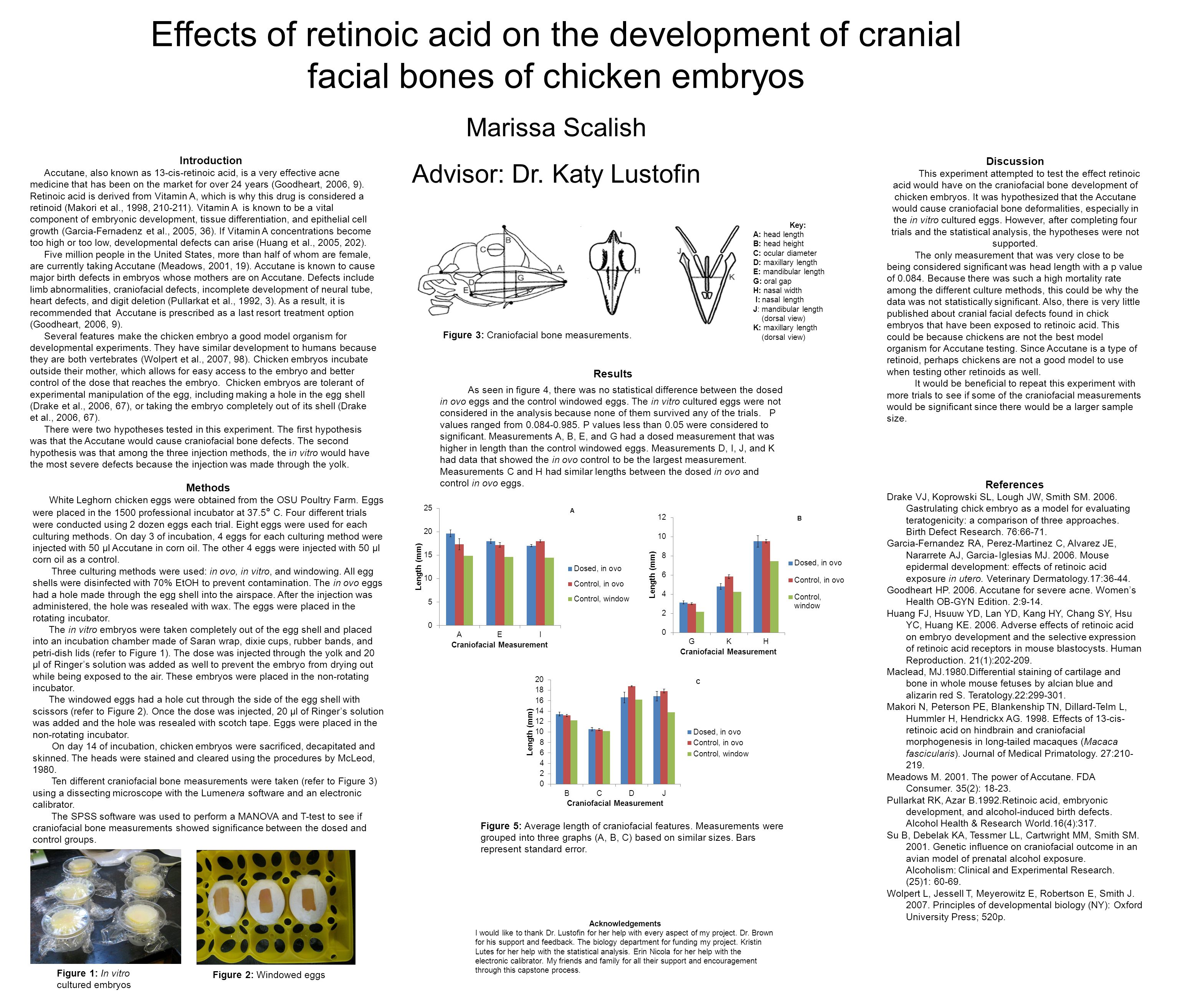 Effects of retinoic acid on the development of cranial facial bones of chicken embryos Marissa Scalish Advisor: Dr. Katy Lustofin Introduction Accutan