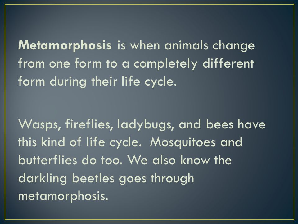 Metamorphosis is when animals change from one form to a completely different form during their life cycle. Wasps, fireflies, ladybugs, and bees have t