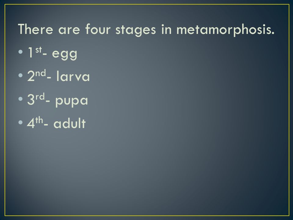 There are four stages in metamorphosis. 1 st - egg 2 nd - larva 3 rd - pupa 4 th - adult