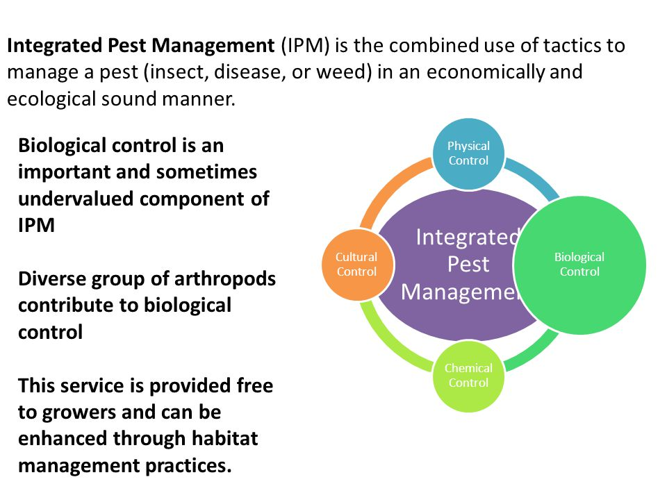 Biological control is an important and sometimes undervalued component of IPM Diverse group of arthropods contribute to biological control This service is provided free to growers and can be enhanced through habitat management practices.