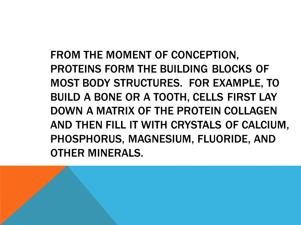 FROM THE MOMENT OF CONCEPTION, PROTEINS FORM THE BUILDING BLOCKS OF MOST BODY STRUCTURES. FOR EXAMPLE, TO BUILD A BONE OR A TOOTH, CELLS FIRST LAY DOW