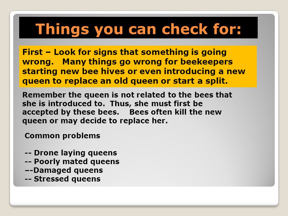 Things you can check for: First – Look for signs that something is going wrong. Many things go wrong for beekeepers starting new bee hives or even int
