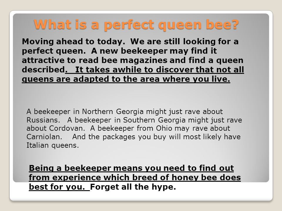 What is a perfect queen bee? Moving ahead to today. We are still looking for a perfect queen. A new beekeeper may find it attractive to read bee magaz