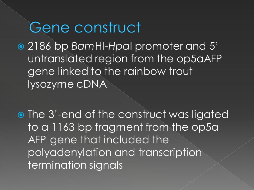 2186 bp BamHI-HpaI promoter and 5 untranslated region from the op5aAFP gene linked to the rainbow trout lysozyme cDNA The 3-end of the construct was ligated to a 1163 bp fragment from the op5a AFP gene that included the polyadenylation and transcription termination signals