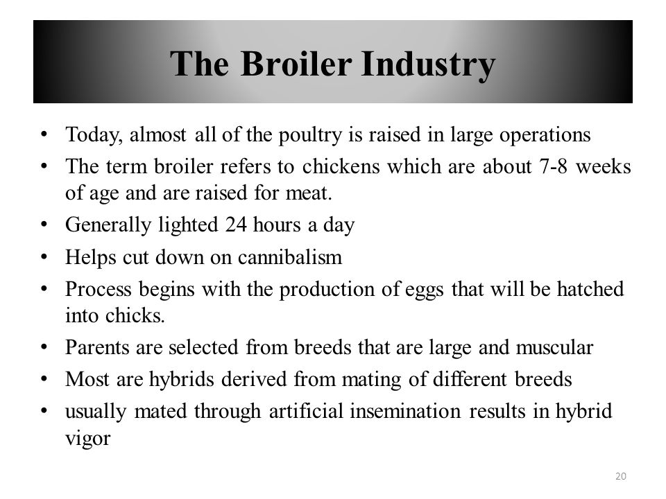 The Broiler Industry Today, almost all of the poultry is raised in large operations The term broiler refers to chickens which are about 7-8 weeks of a