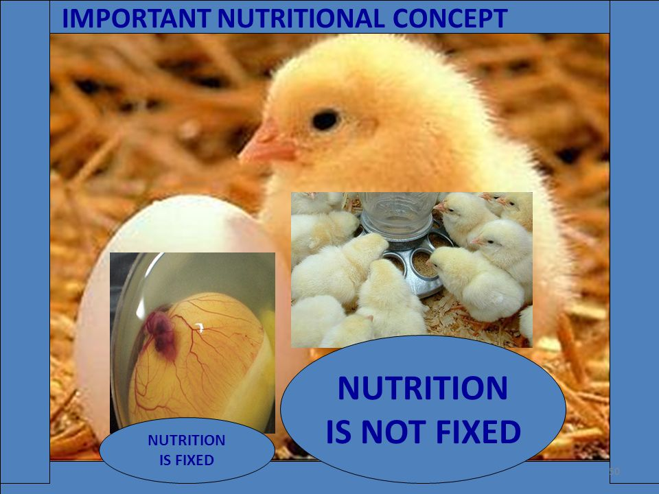 IMPORTANT NUTRITIONAL CONCEPT NUTRITION IS FIXED NUTRITION IS NOT FIXED 50
