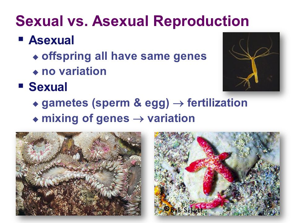 Animal Reproduction Chapter 42-43