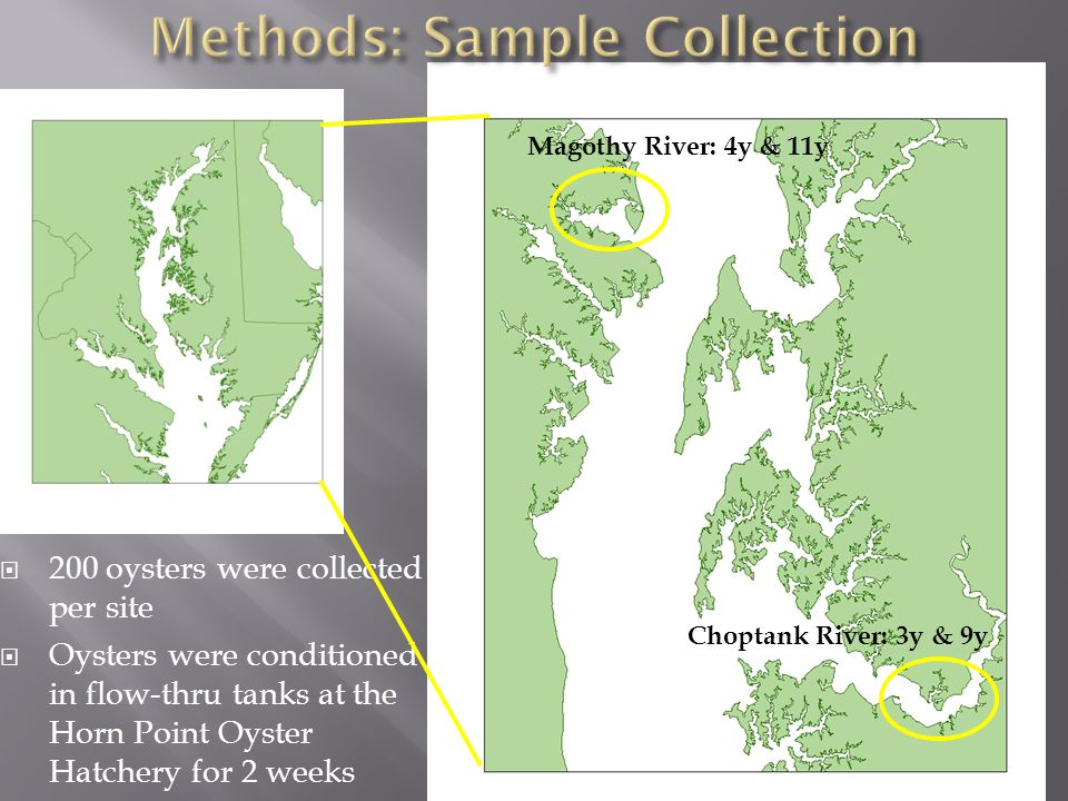 Our data point to differences in egg lipid content and composition in oysters…so what?!?.