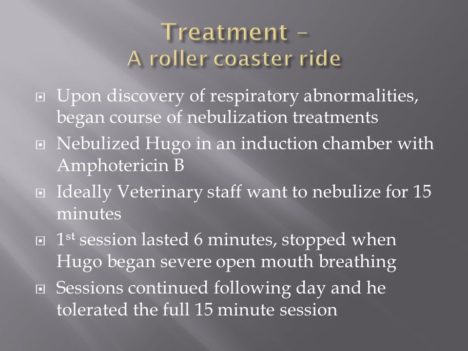 Upon discovery of respiratory abnormalities, began course of nebulization treatments Nebulized Hugo in an induction chamber with Amphotericin B Ideally Veterinary staff want to nebulize for 15 minutes 1 st session lasted 6 minutes, stopped when Hugo began severe open mouth breathing Sessions continued following day and he tolerated the full 15 minute session