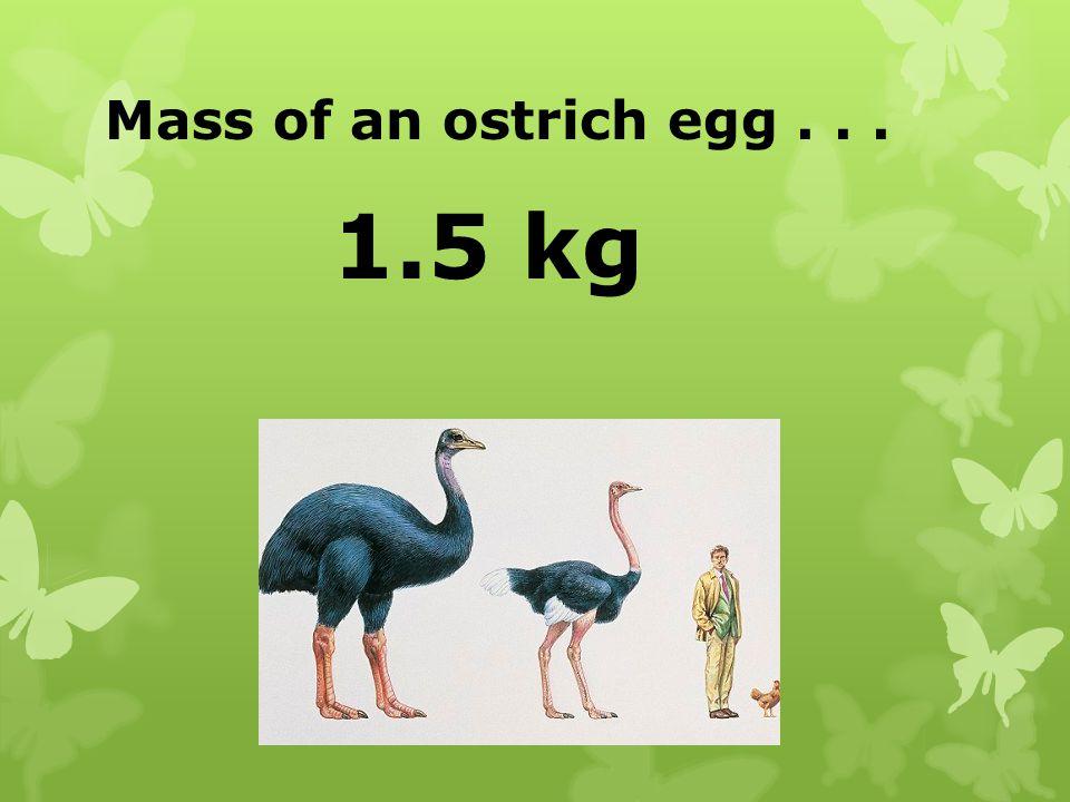 Mass of an ostrich egg... 1.5 kg