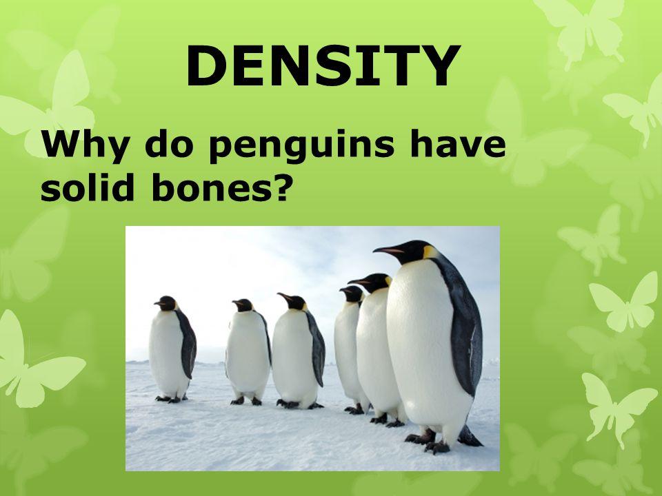 DENSITY Why do penguins have solid bones?
