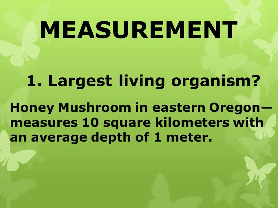 MEASUREMENT 1. Largest living organism? Honey Mushroom in eastern Oregon measures 10 square kilometers with an average depth of 1 meter.