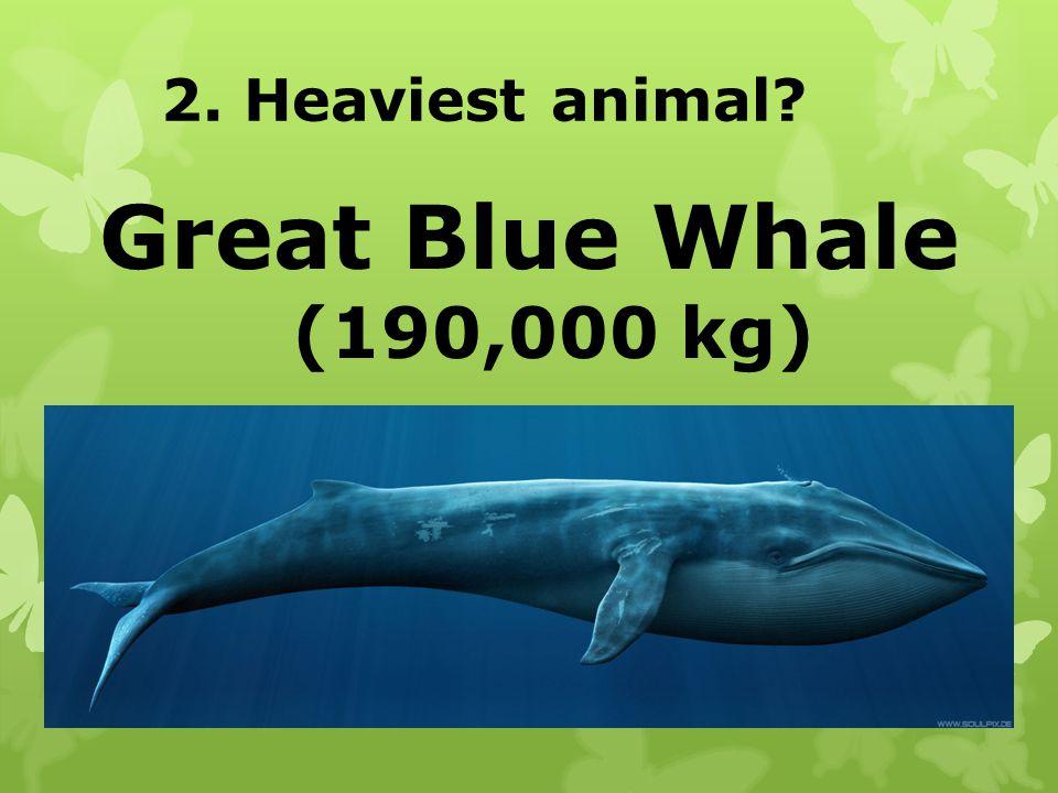 2. Heaviest animal? Great Blue Whale (190,000 kg)