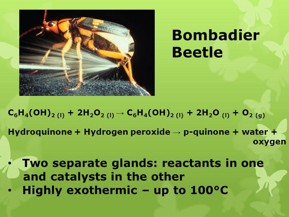 Bombadier Beetle C 6 H 4 (OH) 2 (l) + 2H 2 O 2 (l) C 6 H 4 (OH) 2 (l) + 2H 2 O (l) + O 2 (g) Hydroquinone + Hydrogen peroxide p-quinone + water + oxyg