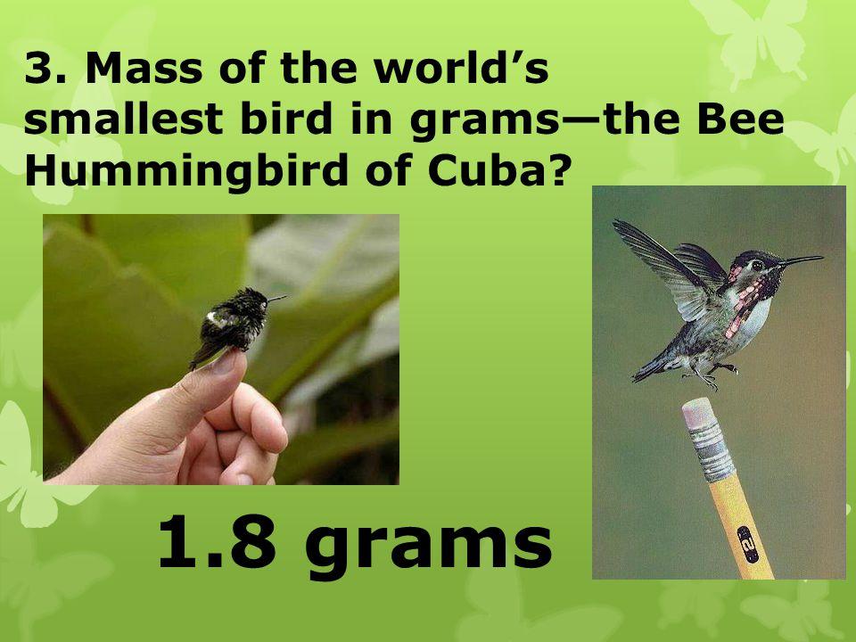 3. Mass of the worlds smallest bird in gramsthe Bee Hummingbird of Cuba? 1.8 grams