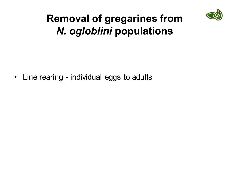Removal of gregarines from N. ogloblini populations Line rearing - individual eggs to adults