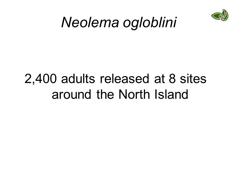 Neolema ogloblini 2,400 adults released at 8 sites around the North Island