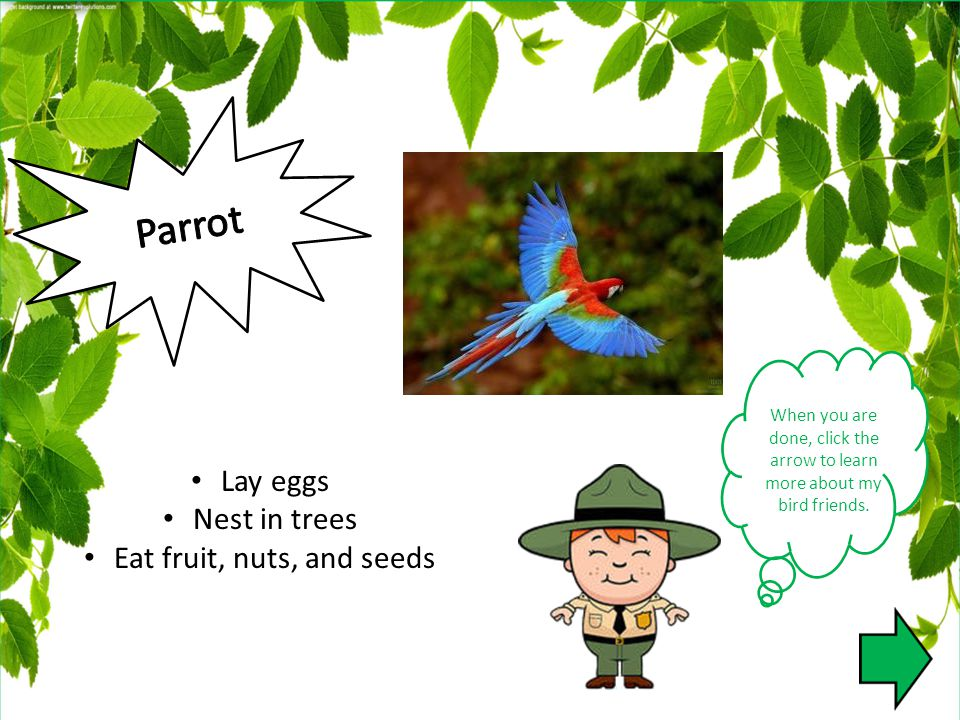 When you are done, click the arrow to learn more about my bird friends. Lay eggs Nest in trees Eat fruit, nuts, and seeds
