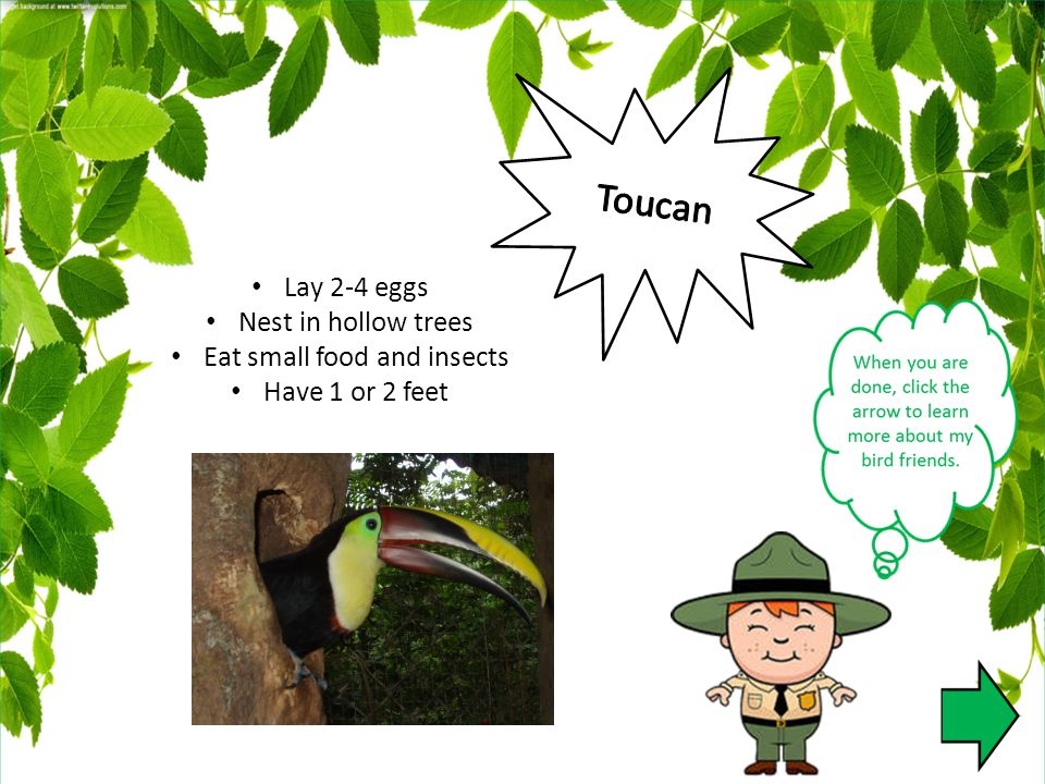 Lay 2-4 eggs Nest in hollow trees Eat small food and insects Have 1 or 2 feet