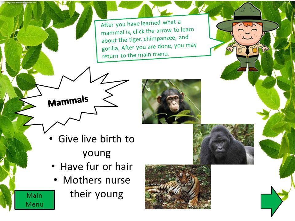 Give live birth to young Have fur or hair Mothers nurse their young After you have learned what a mammal is, click the arrow to learn about the tiger,