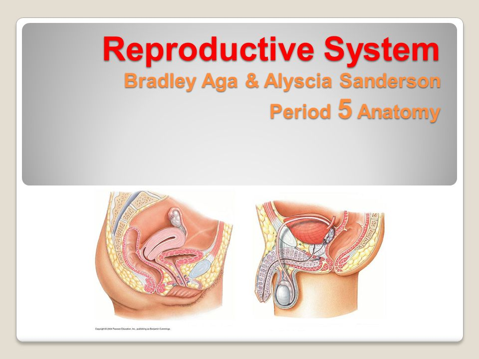 Reproductive System also know as genital system system of organs within an organism which work together for the purpose of reproduction fluids, hormones, and pheromones are important accessories to the system the sexes of different species often have significant differences, unlike most organ systems major external genitalia- penis and vulva major internal genitalia- testicles and ovaries communicable sexually transmitted diseases.