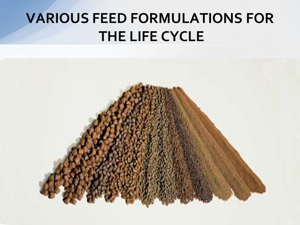 VARIOUS FEED FORMULATIONS FOR THE LIFE CYCLE