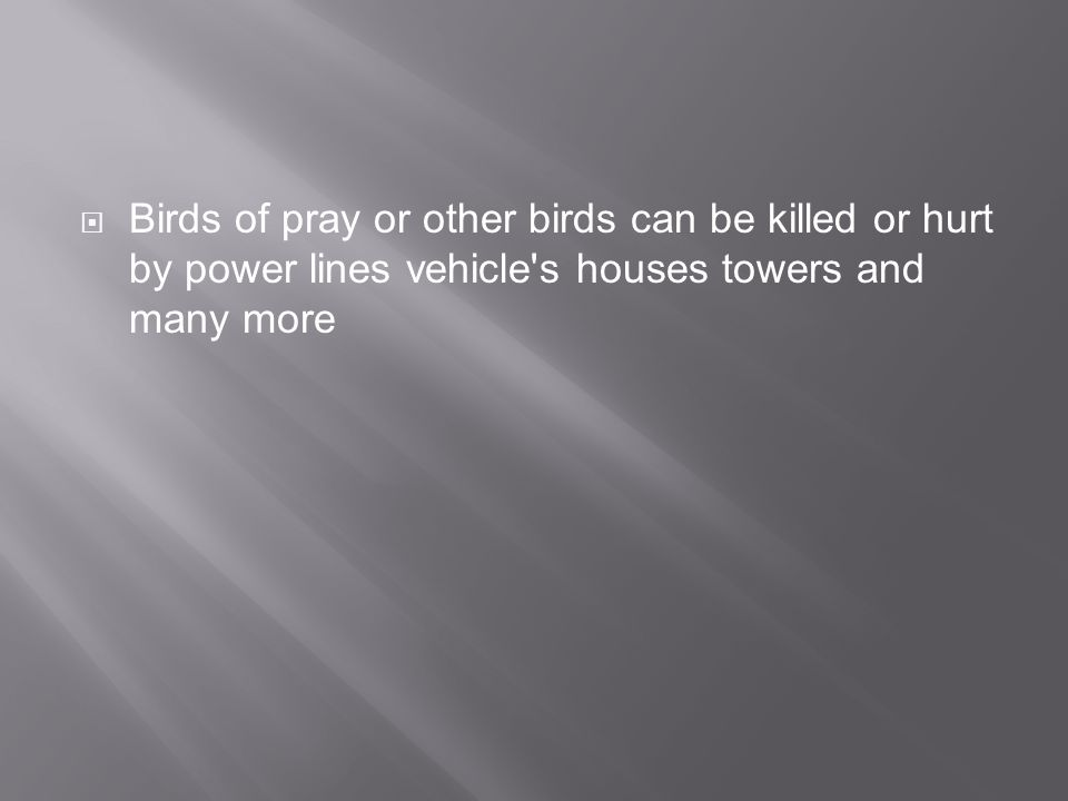 Birds of pray or other birds can be killed or hurt by power lines vehicle s houses towers and many more