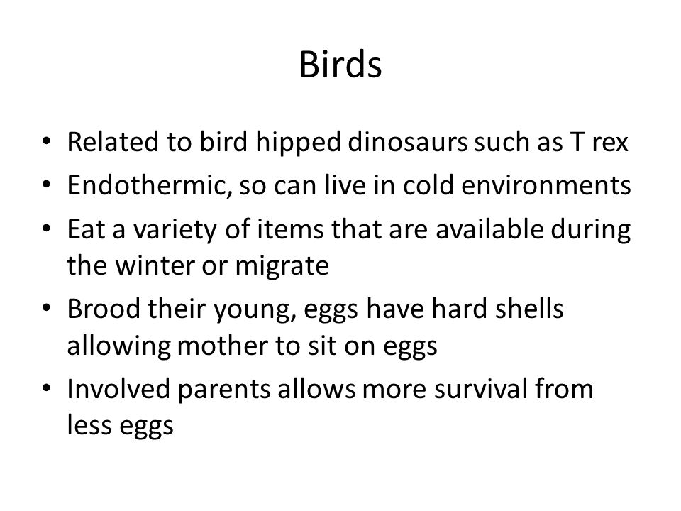 Birds Related to bird hipped dinosaurs such as T rex Endothermic, so can live in cold environments Eat a variety of items that are available during the winter or migrate Brood their young, eggs have hard shells allowing mother to sit on eggs Involved parents allows more survival from less eggs