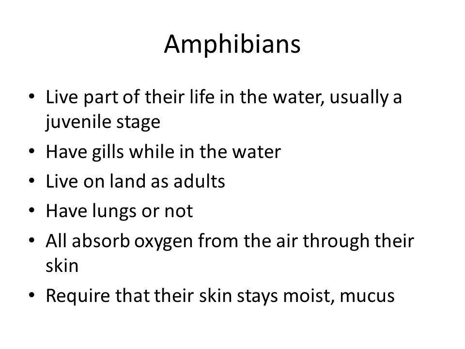 Amphibians Live part of their life in the water, usually a juvenile stage Have gills while in the water Live on land as adults Have lungs or not All a