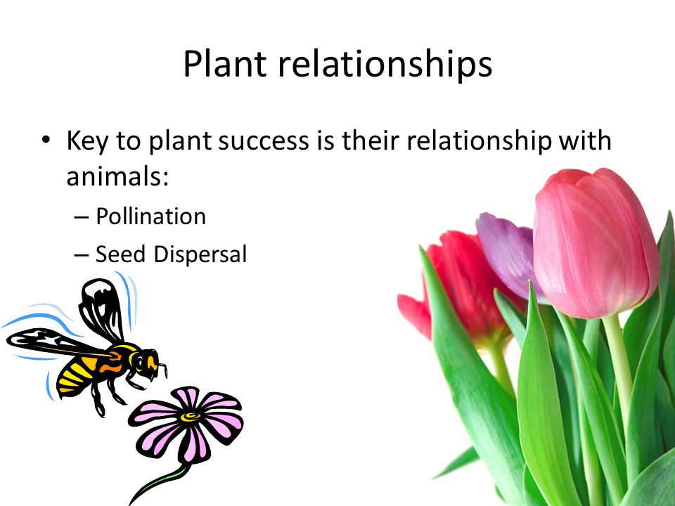 Plant relationships Key to plant success is their relationship with animals: – Pollination – Seed Dispersal