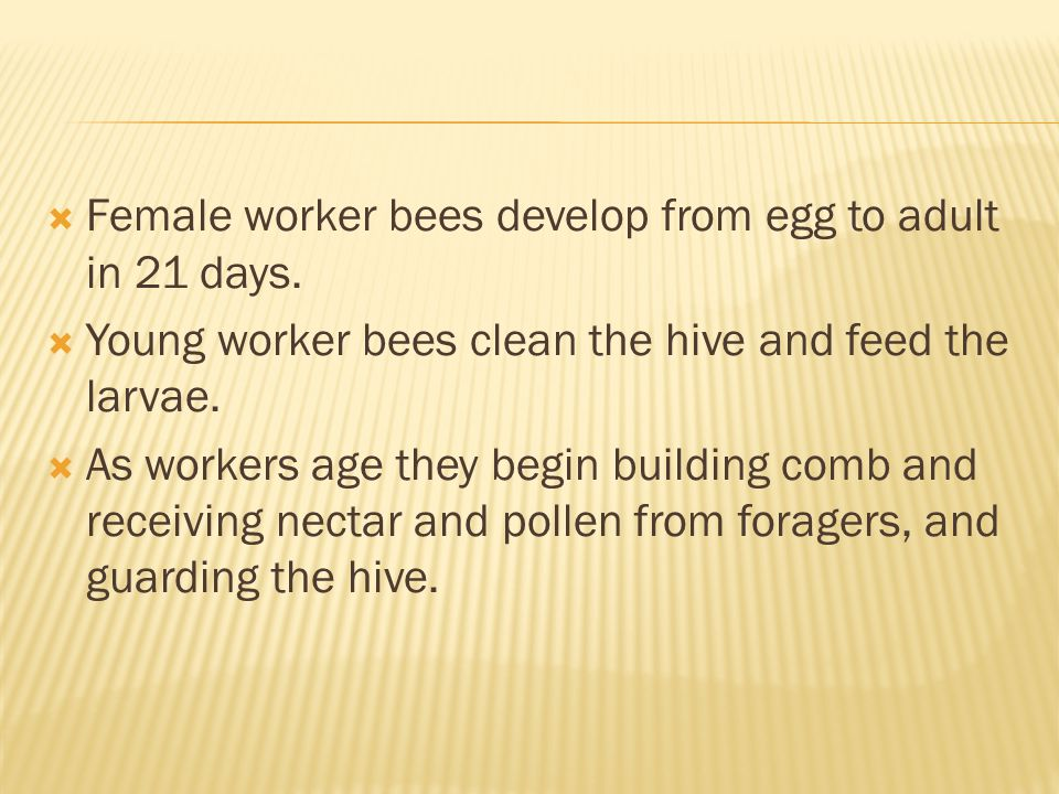 Later a worker takes her first orientation flights and finally leaves the hive and typically spends the remainder of her life as a forager.