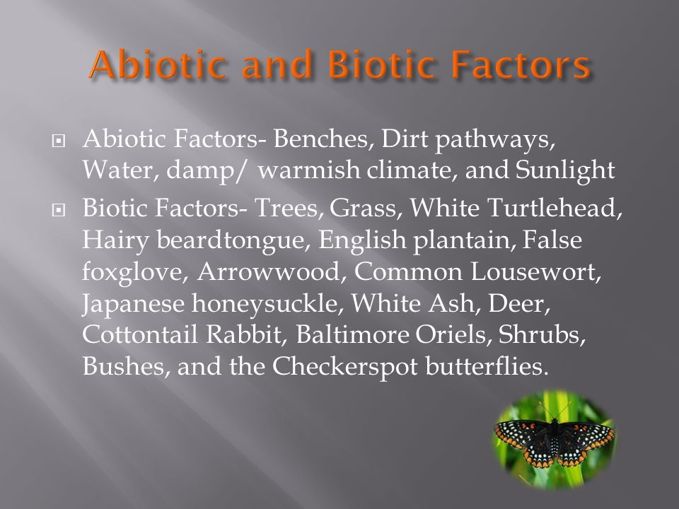 Abiotic Factors- Benches, Dirt pathways, Water, damp/ warmish climate, and Sunlight Biotic Factors- Trees, Grass, White Turtlehead, Hairy beardtongue, English plantain, False foxglove, Arrowwood, Common Lousewort, Japanese honeysuckle, White Ash, Deer, Cottontail Rabbit, Baltimore Oriels, Shrubs, Bushes, and the Checkerspot butterflies.