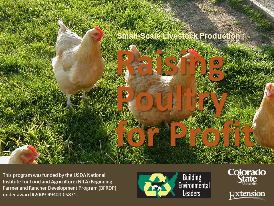Small-Scale Livestock Production Raising Poultry for Profit Small-Scale Livestock Production Raising Poultry for Profit This program was funded by the USDA National Institute for Food and Agriculture (NIFA) Beginning Farmer and Rancher Development Program (BFRDP) under award #2009-49400-05871.