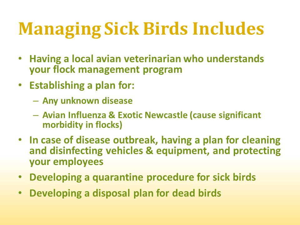Managing Sick Birds Includes Having a local avian veterinarian who understands your flock management program Establishing a plan for: – Any unknown di